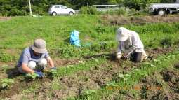 農場草刈り2
